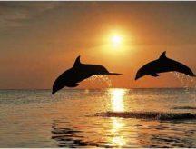 Gyémántfestés szett, delfinek, 40x30cm