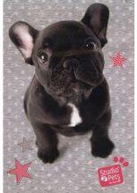 Kutyás vázlatfüzet A/4, 20 lap, francia bulldog, Paso Studio Pets